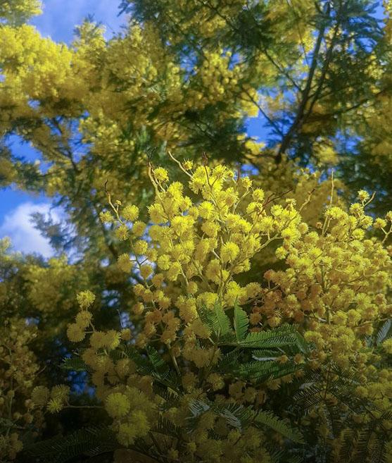 geoponia-tree